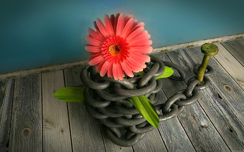 композиция, цветок, интерьер