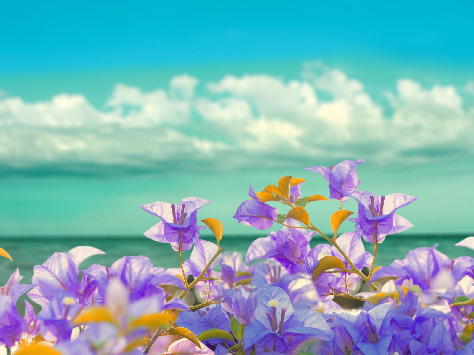 берег, цветы, море