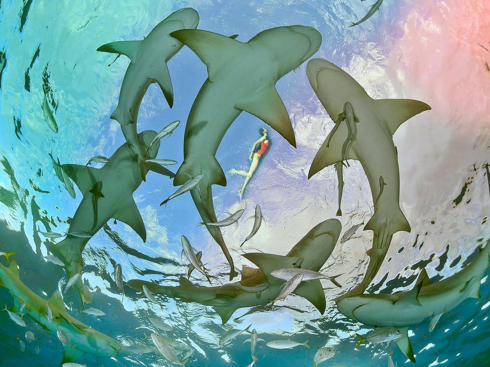 океан, акулы, девушка