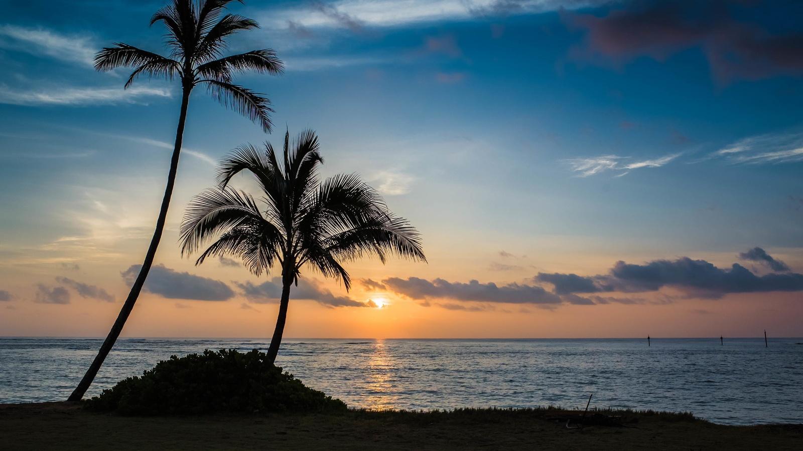 пальма, пляж, закат, море