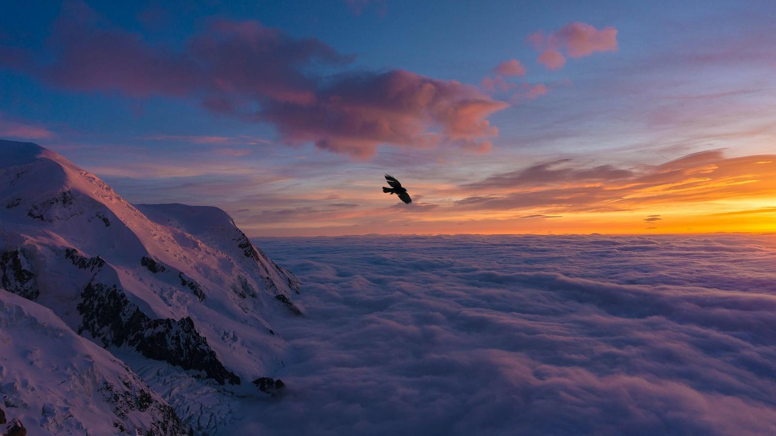 птица, крылья, облака, полёт, закат