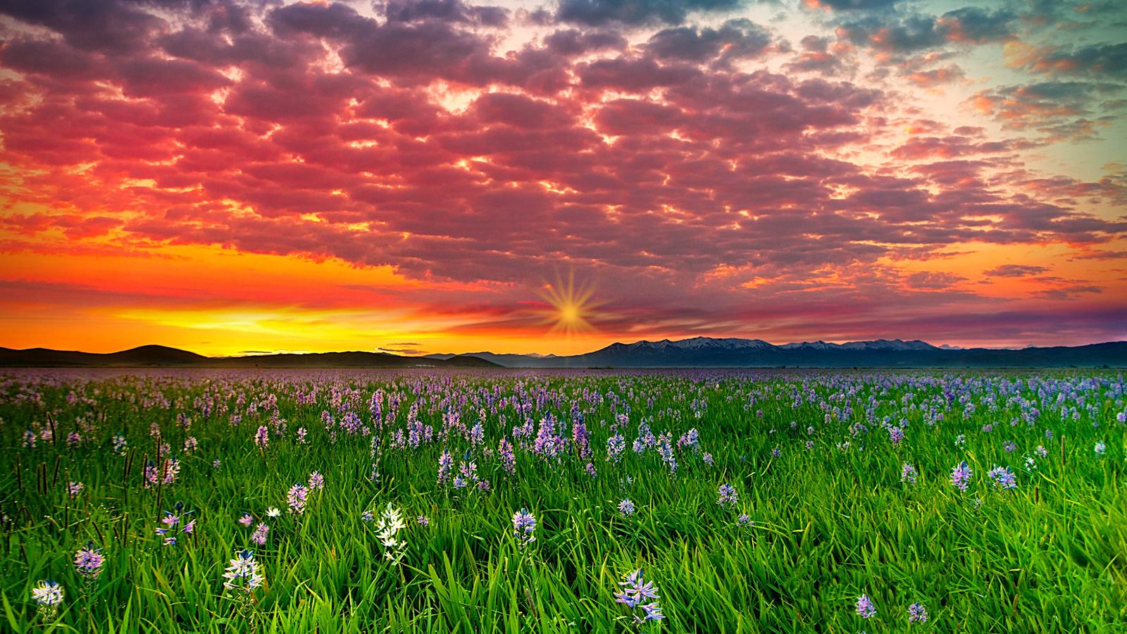луг, трава, цветы, небо, закат, солнце, облака, горы
