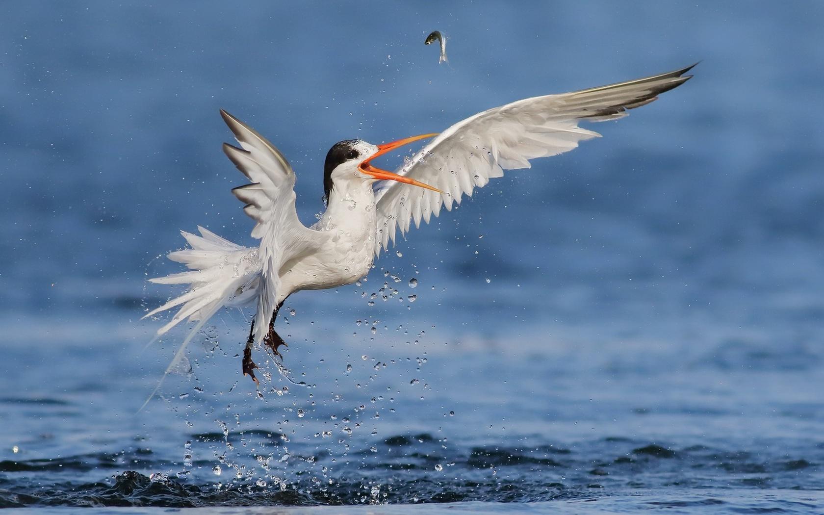 природа, птица, рыба