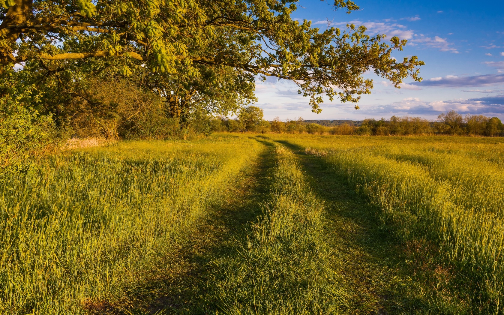 поле, лето, ветки, трава, природа