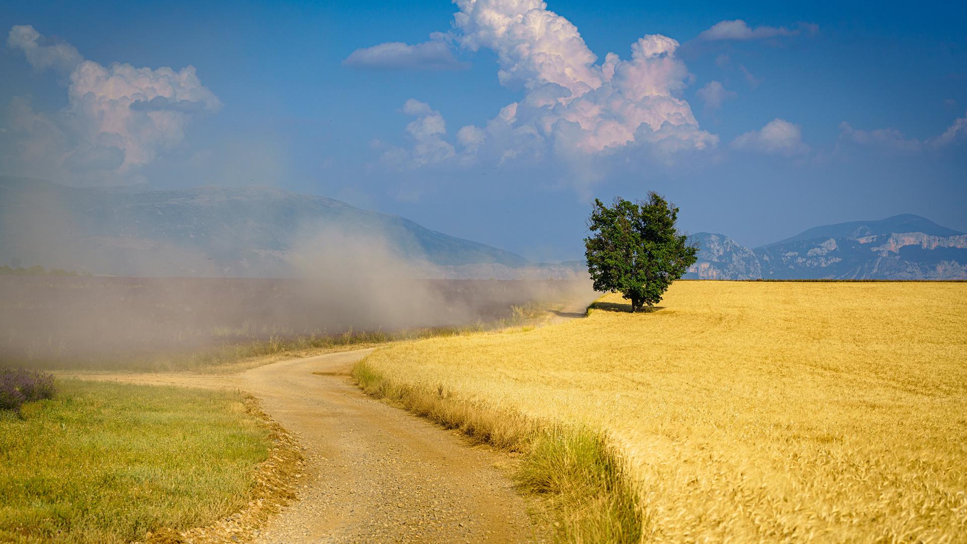 франция, прованс, поле, пыль