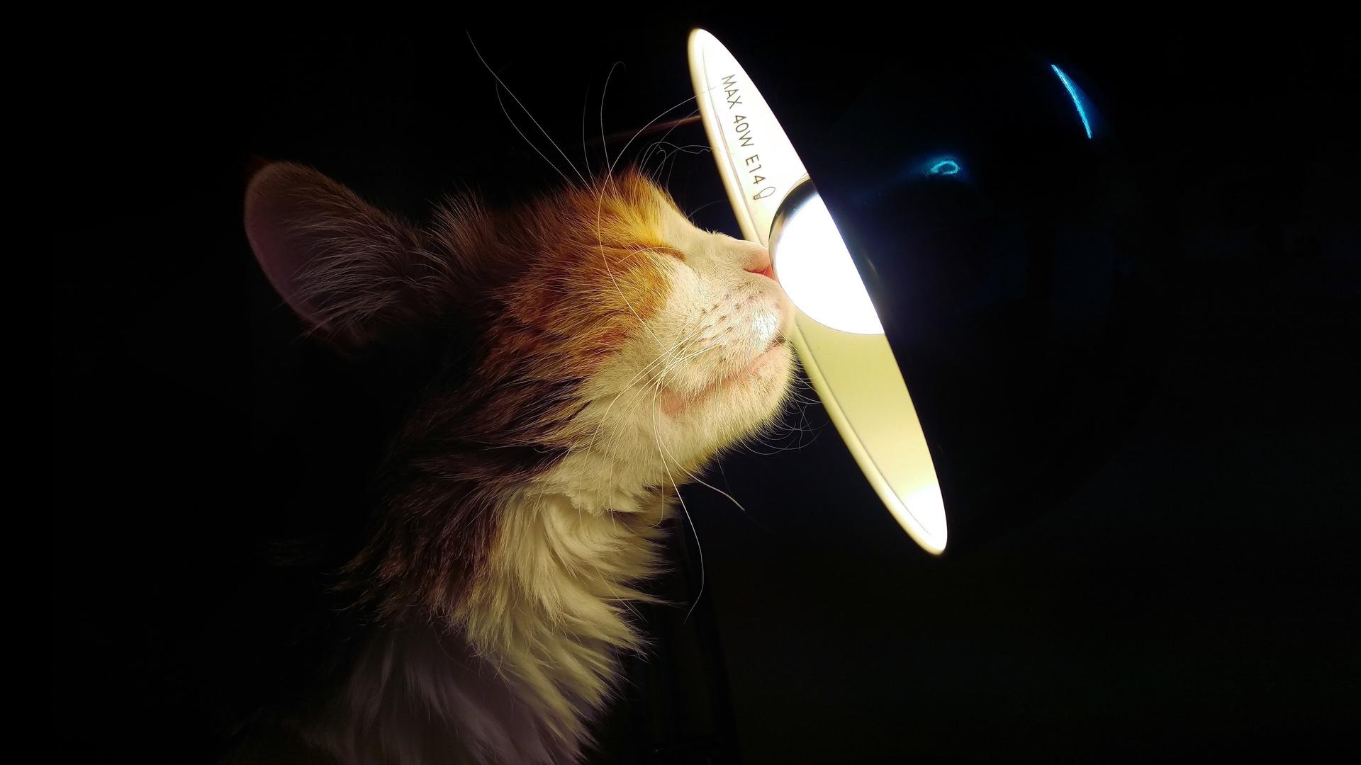 кошка, лампа, морда