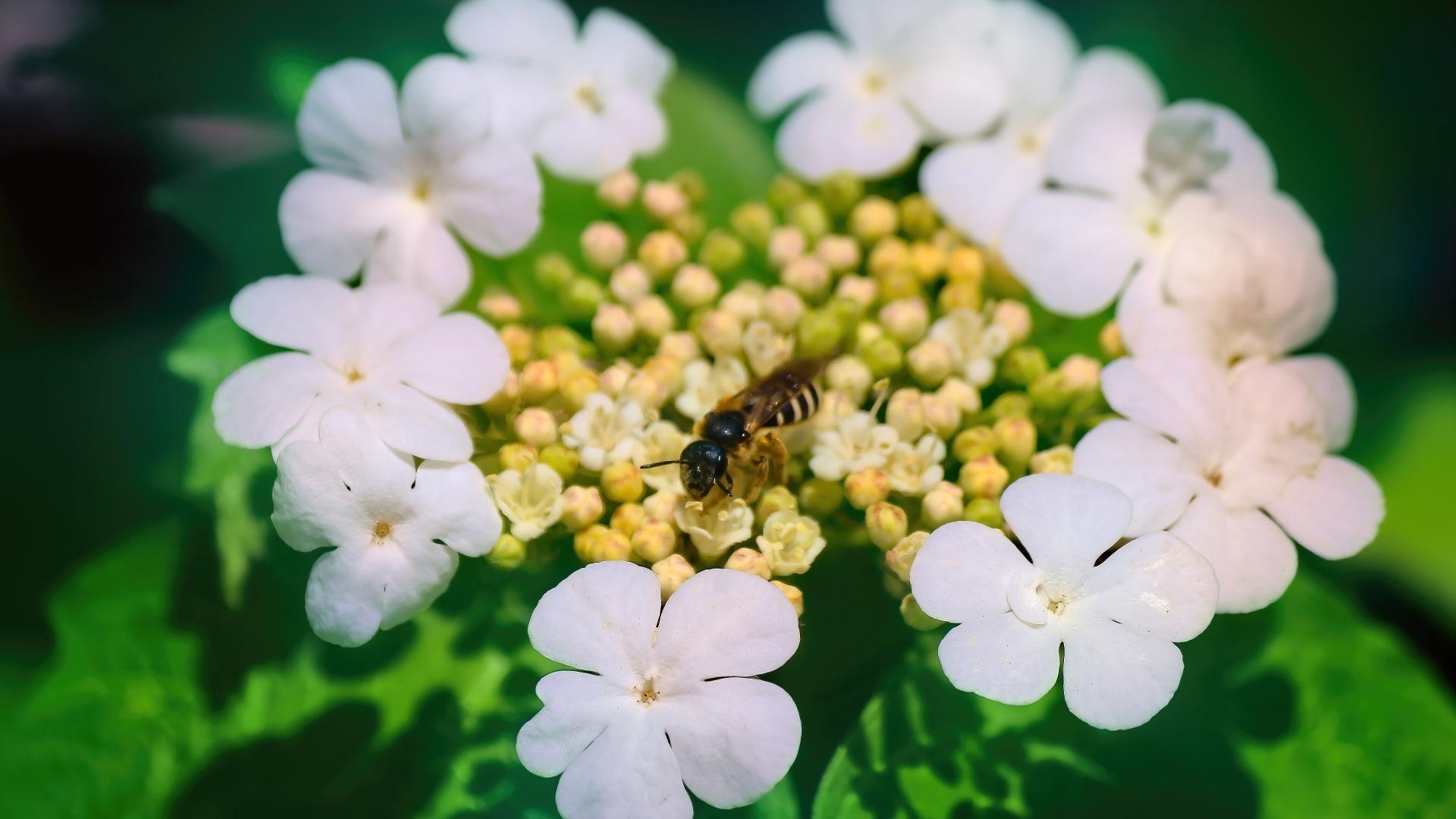 цветок, оса, весна