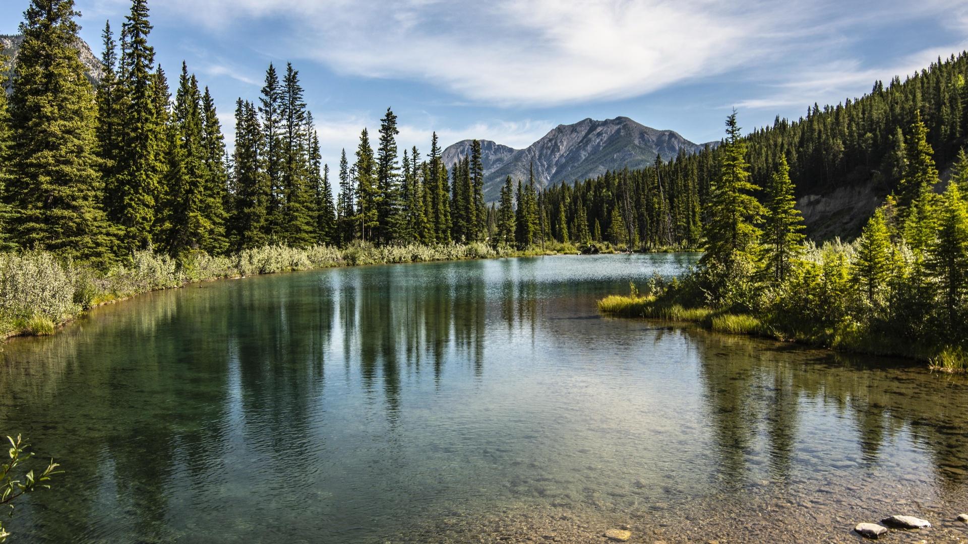 горы, пики, озеро, лес, деревья