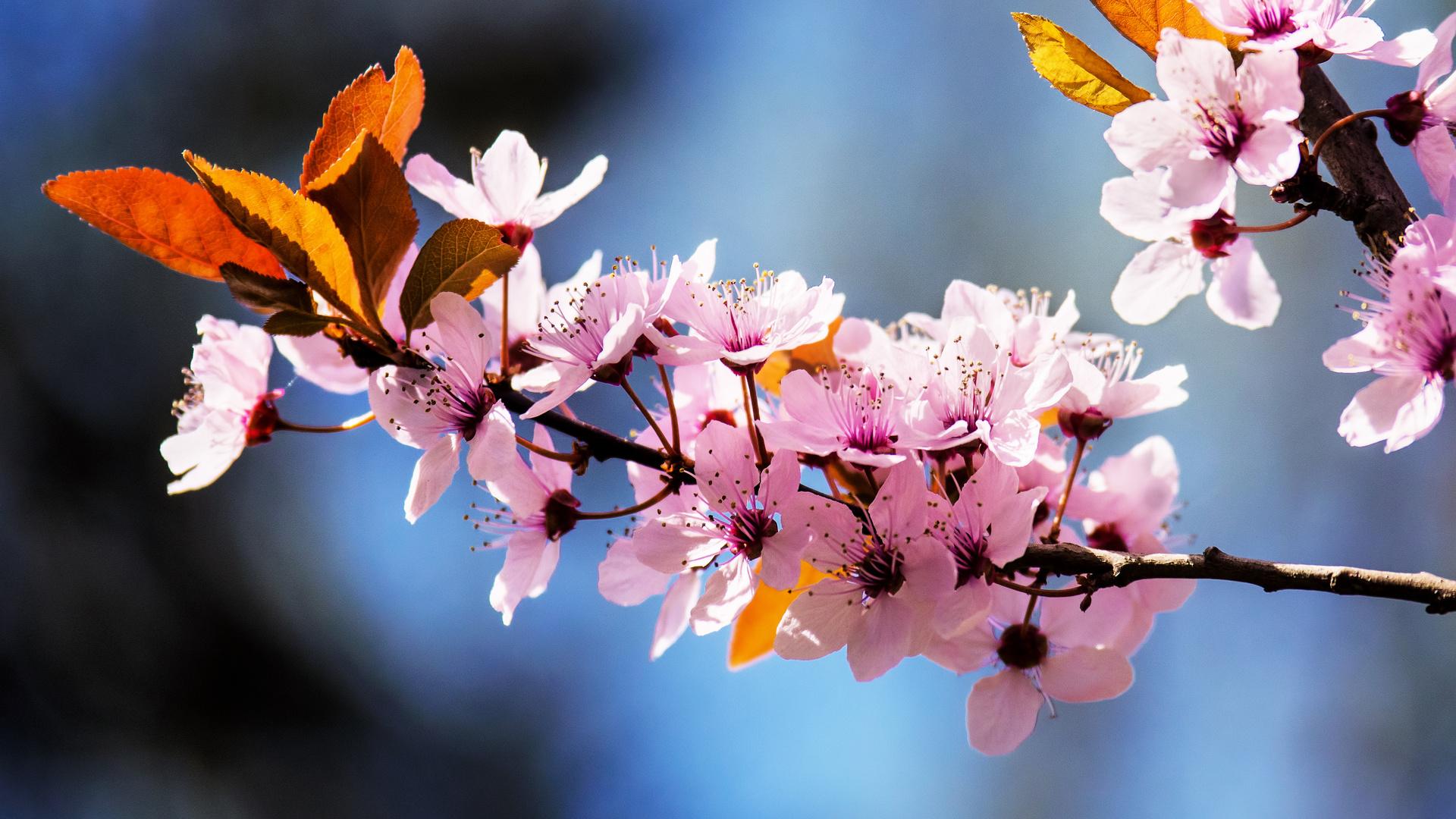 цветы, ветка, весна, цветение