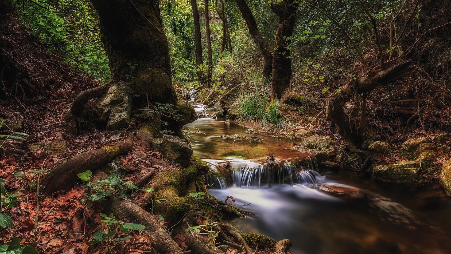 греция, лес, athens, ствол, дерева, ручей, мох, природа