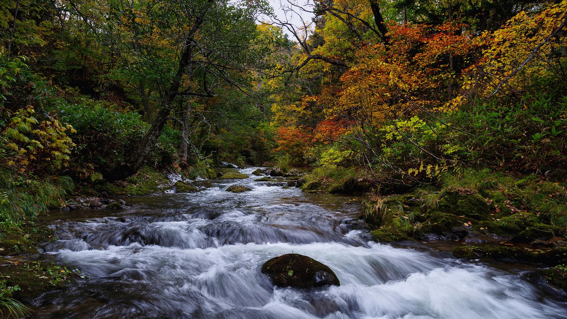 Япония, осень, лес, река, hokkaido, деревья, мох, природа