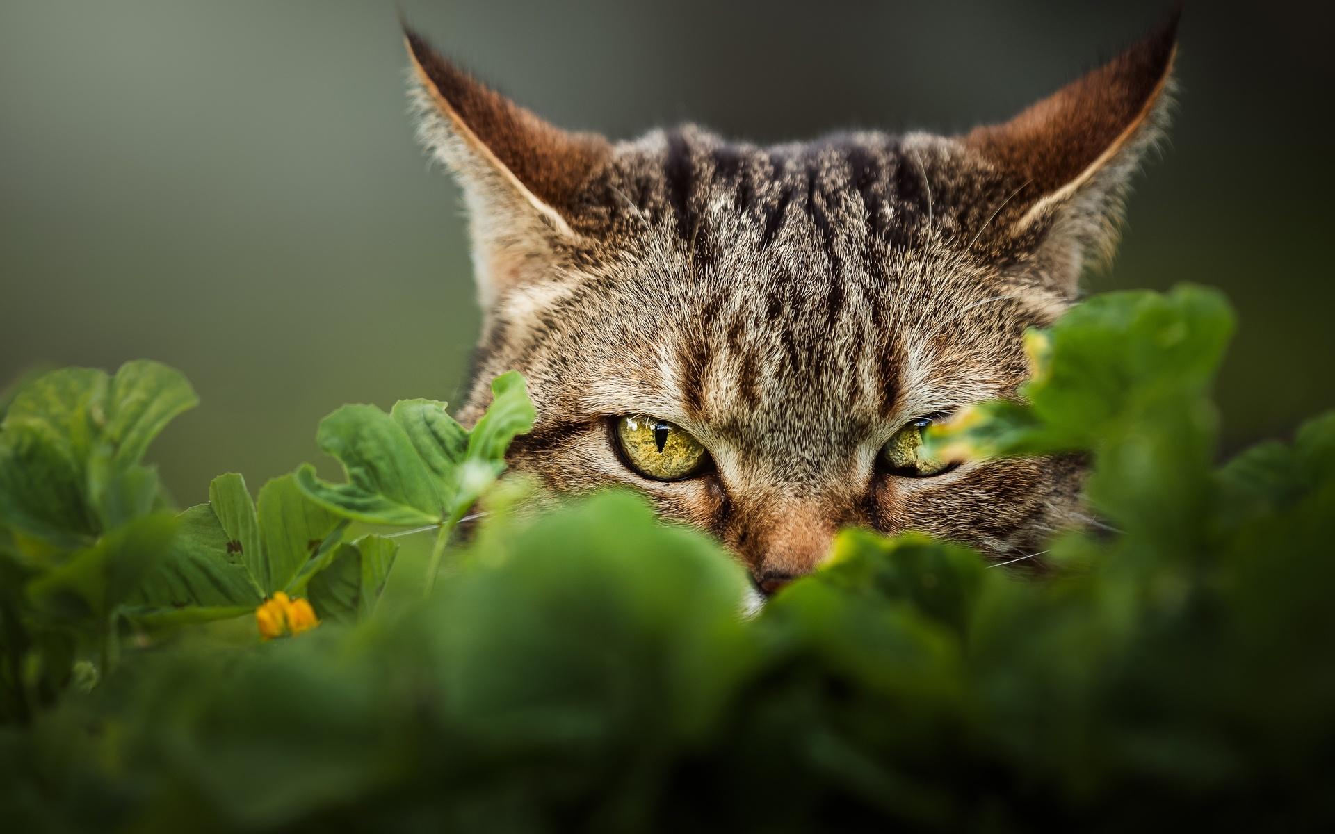 животное, кот, кошка, смотрит