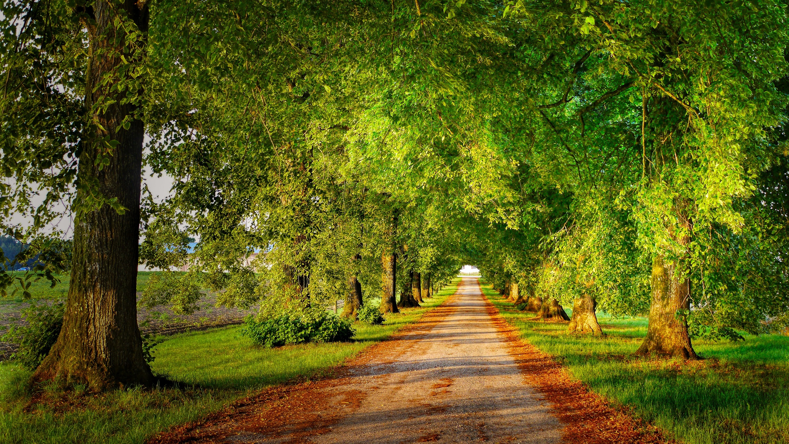 аллея, лето, пейзаж, дорога, деревья