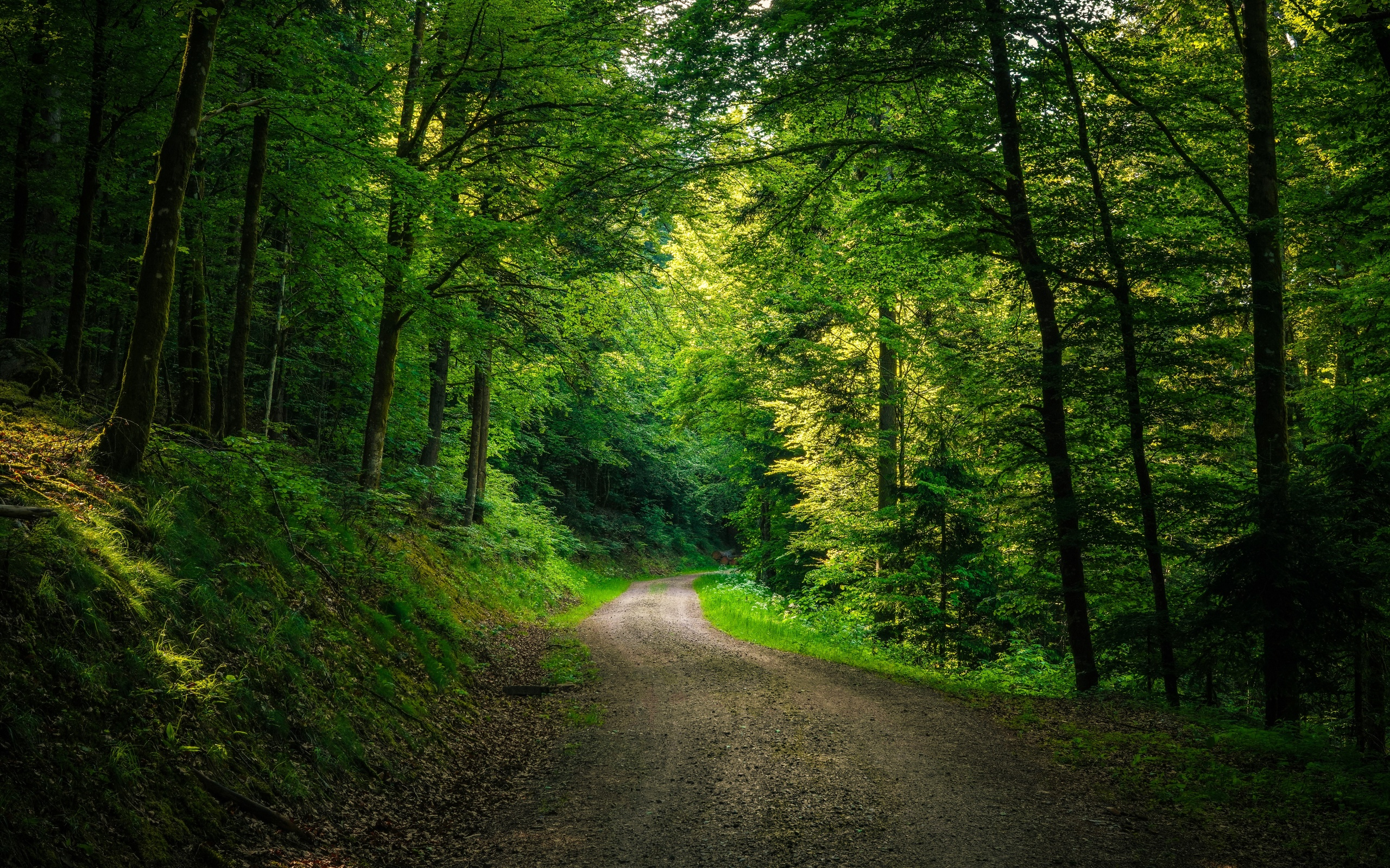 дорога, лес, деревья, природа, пейзаж