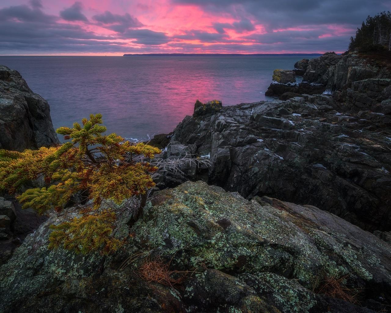 пейзаж, закат, природа, дерево, океан, скалы, сша, новая англия
