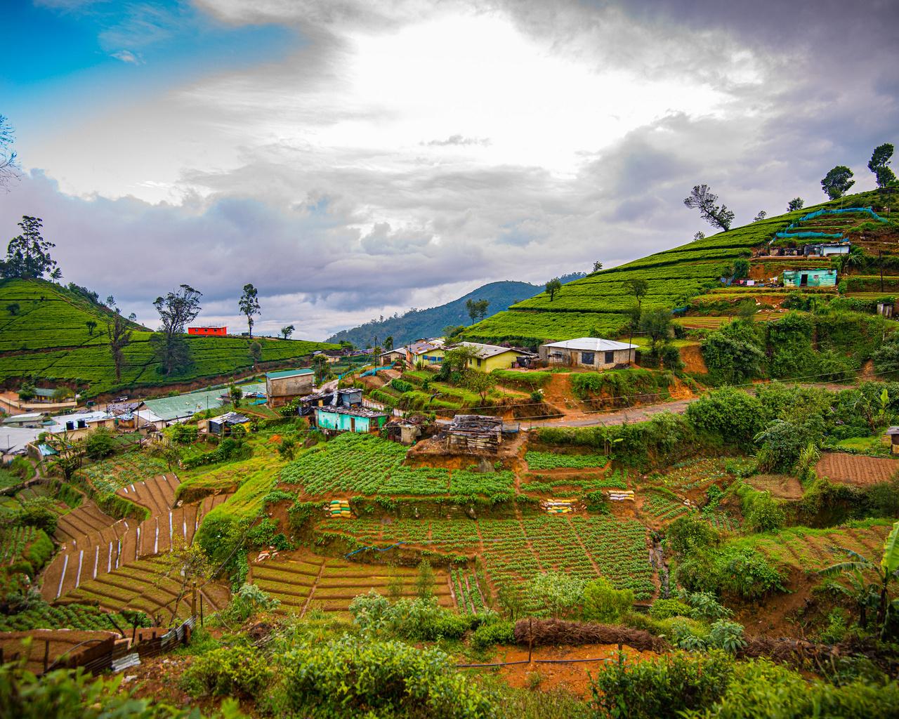шри-ланка, горы, поля, nuwara, eliya, облака, природа