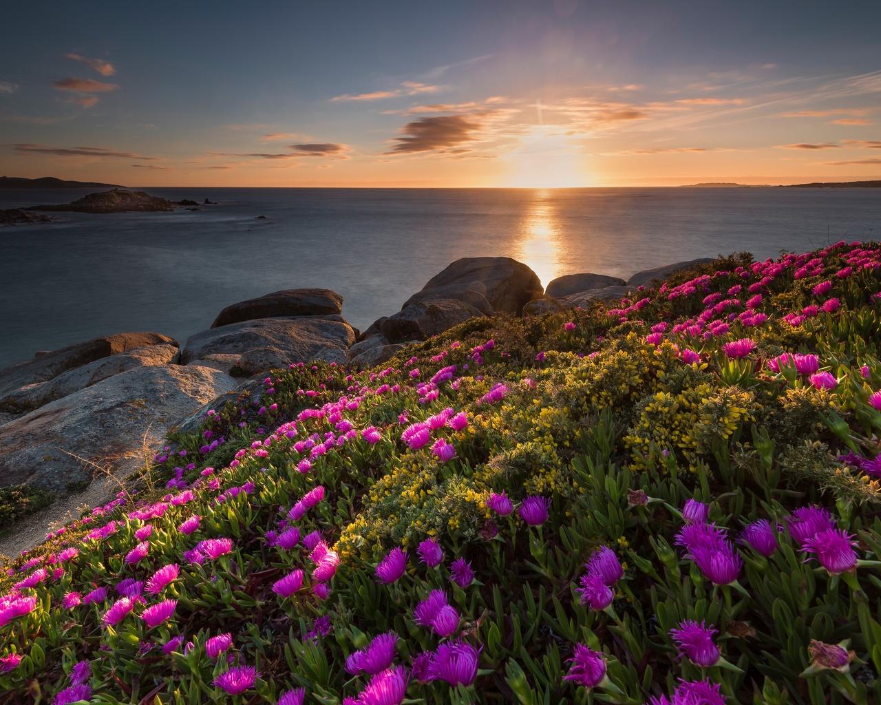 цветы, море, горизонт
