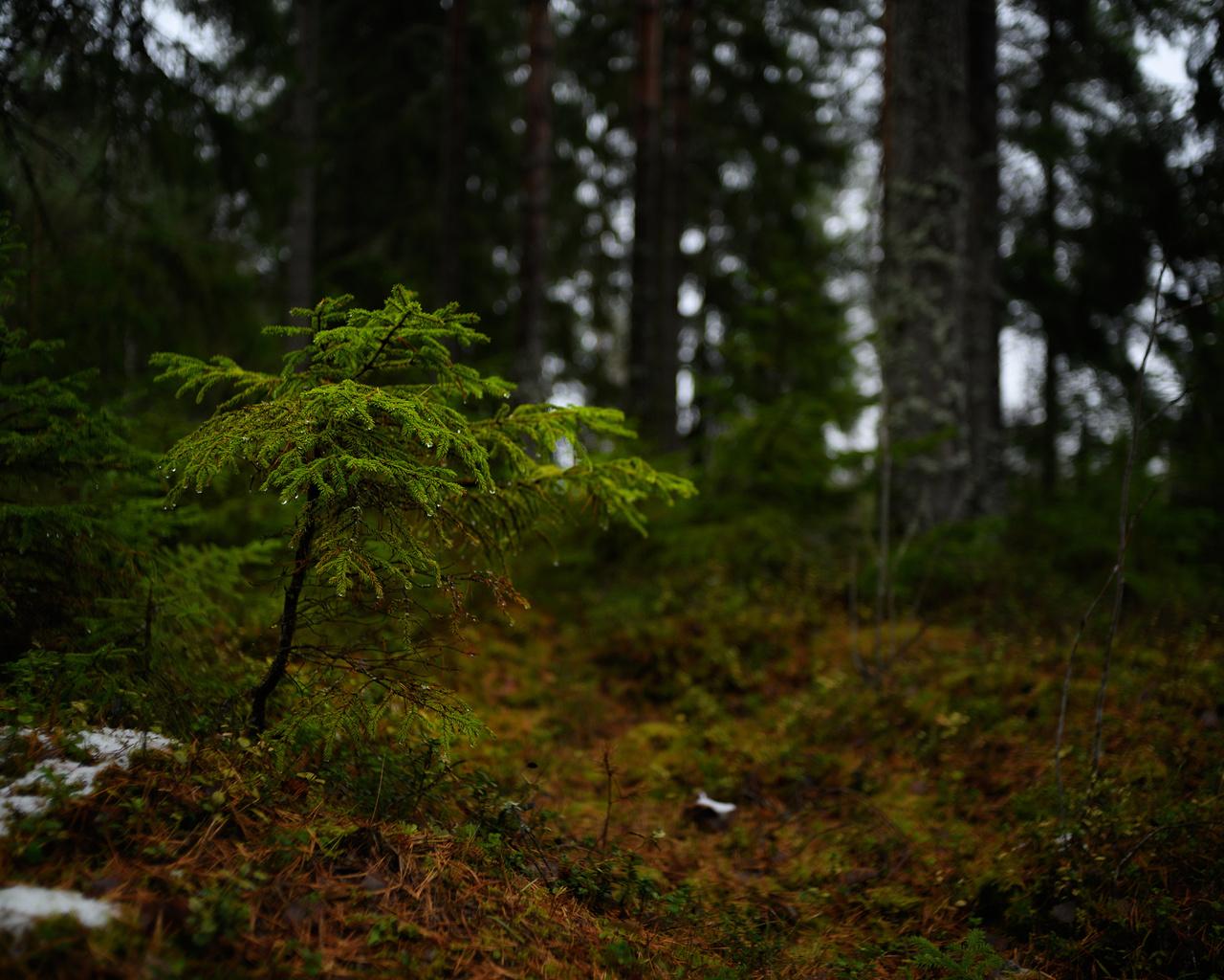 финляндия, лес, деревья, размытый фон, природа