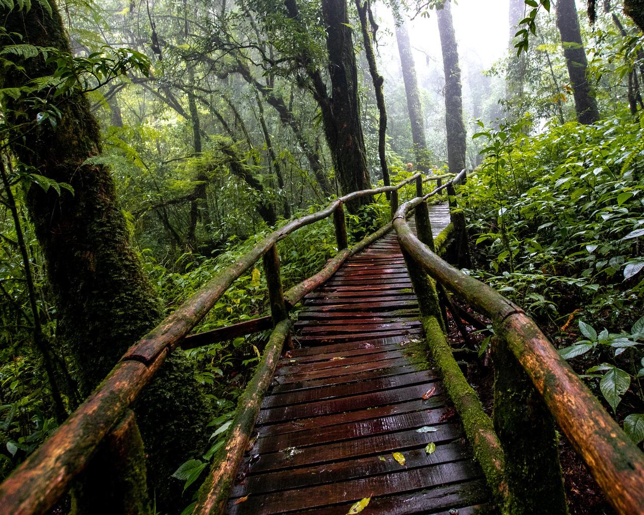 природа, лес, деревья, дорожка, дождь