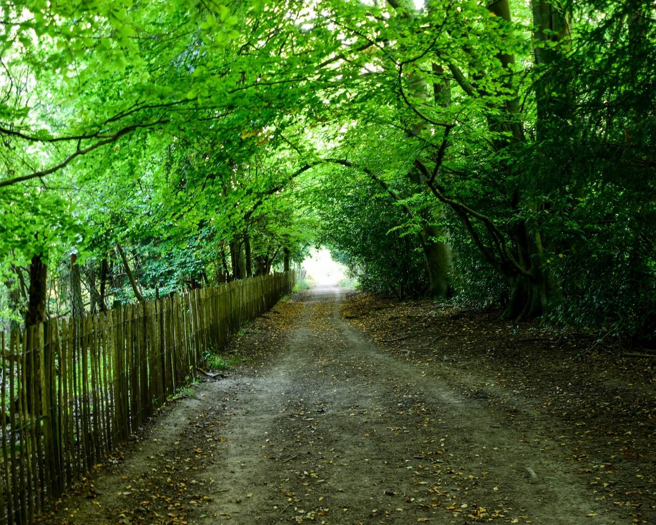 деревья, тень, дорожка, забор