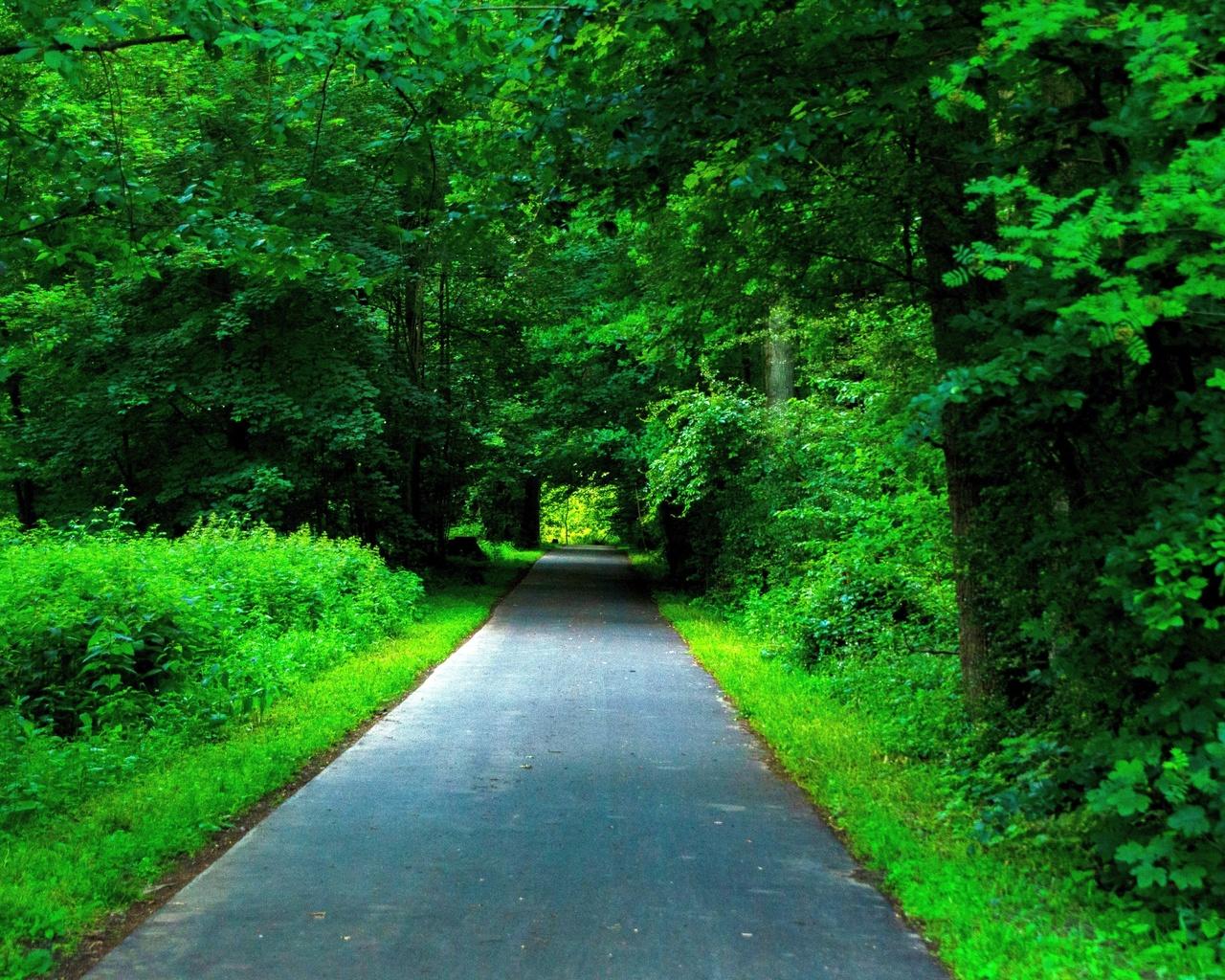 парк, дорожка, тень, лето