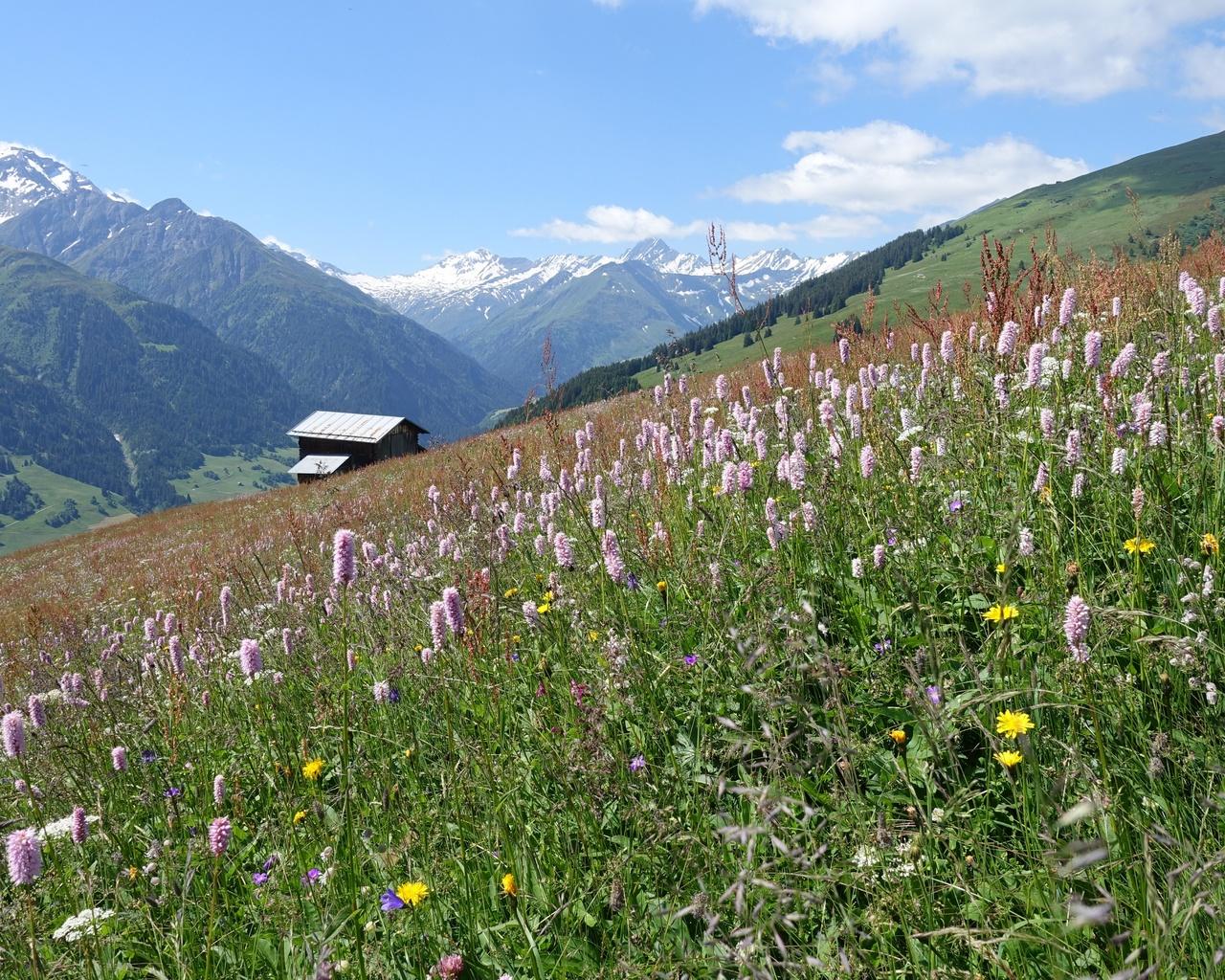 горы, швейцария, луг, grisons, трава, природа