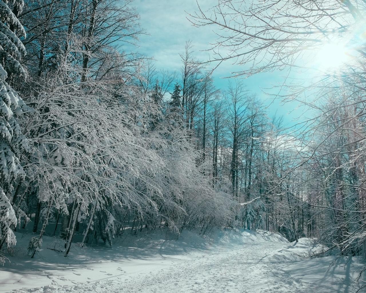 деревья, лес, небо, лучи, зима, пейзаж
