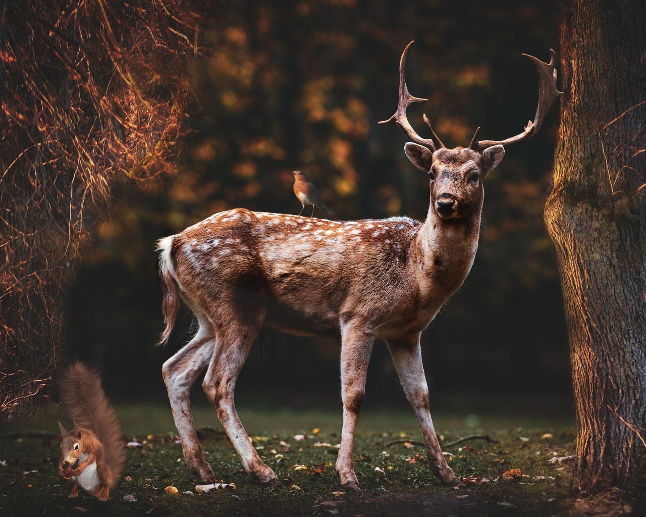 природа, животное, олень