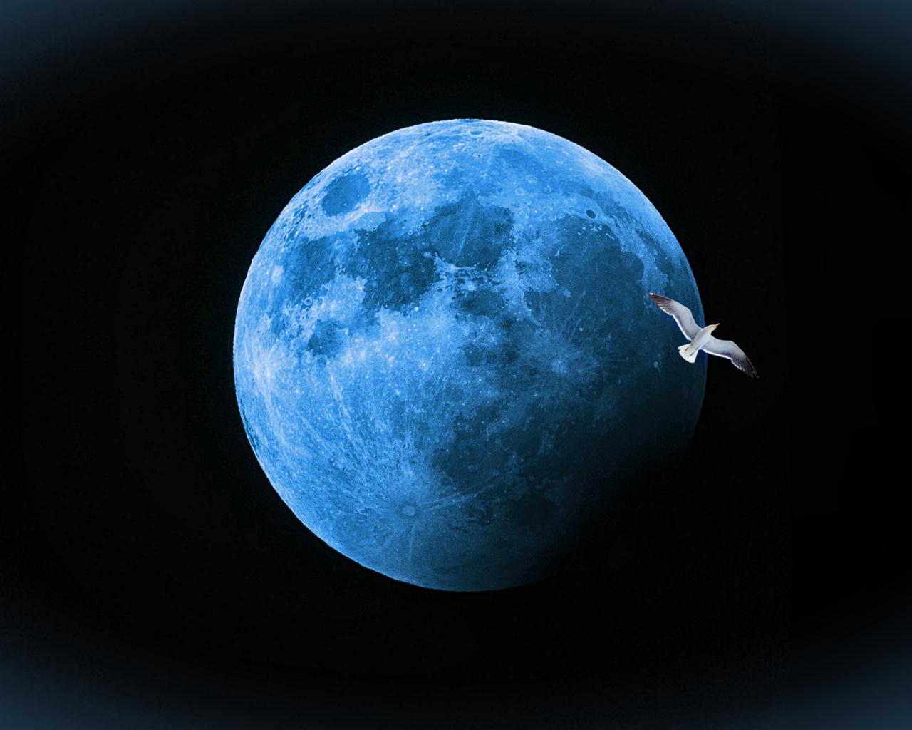 луна, чайка, фон