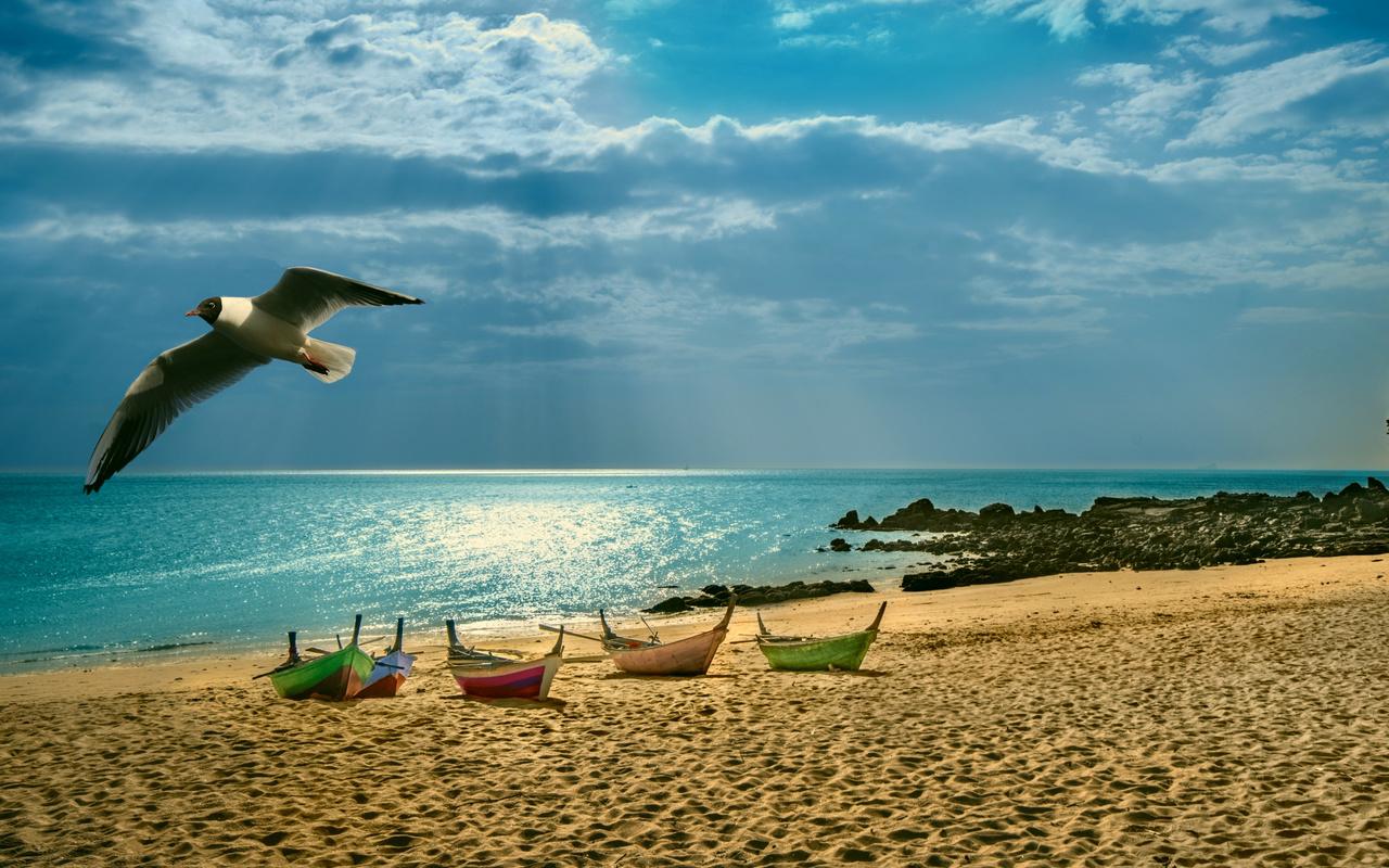 чайка, океан, пляж