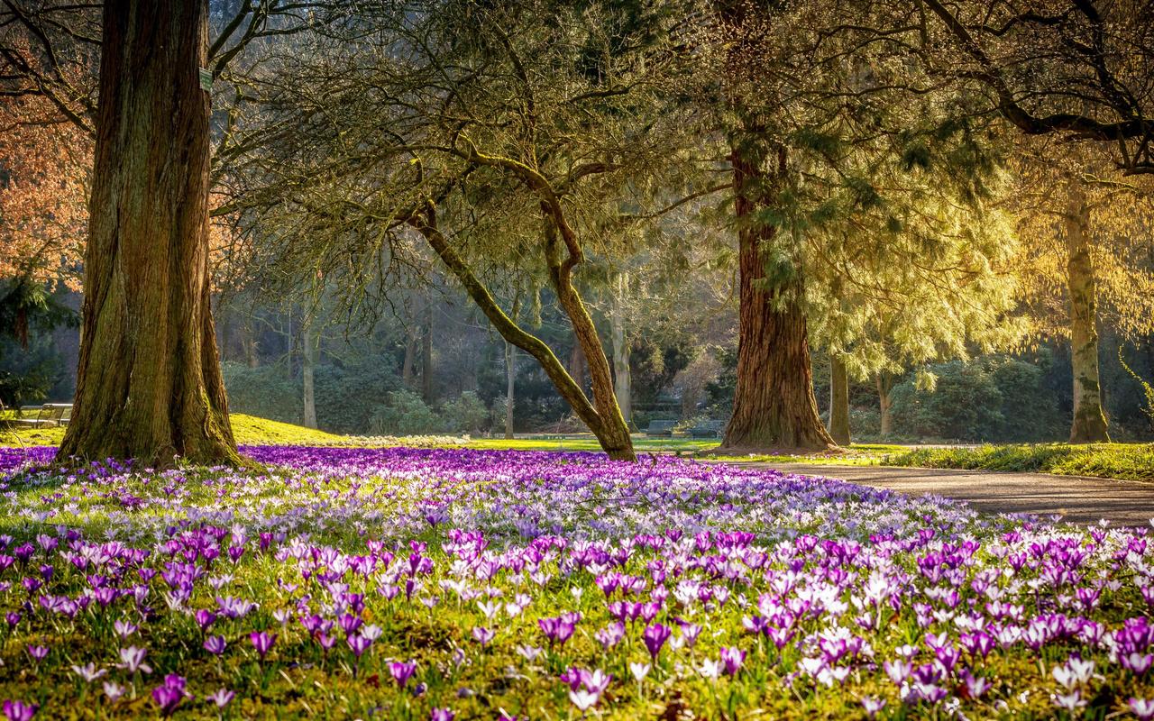 весна, крокусы, трава, цветы