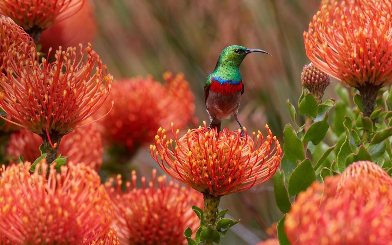 птицы мира, цветы