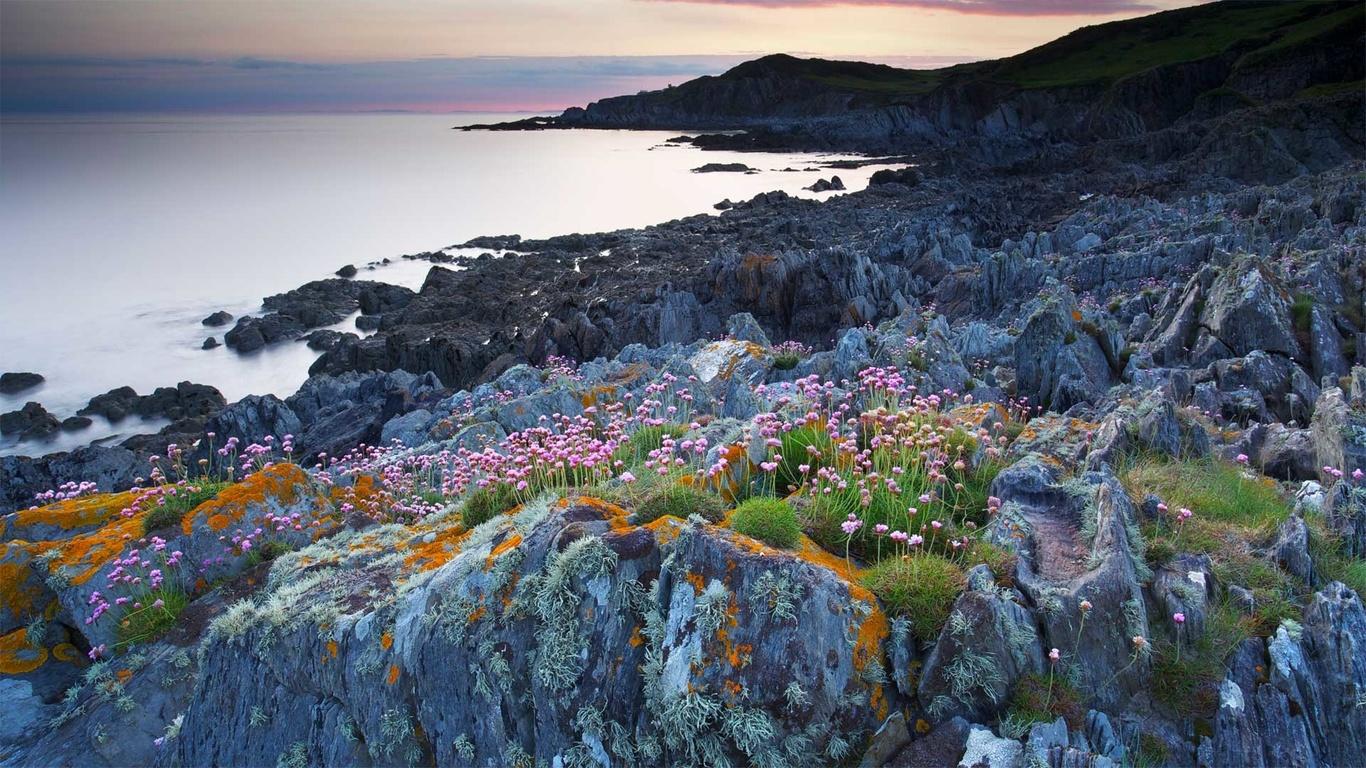 природа, пейзаж, океан, берег, камни, растительность, цветы