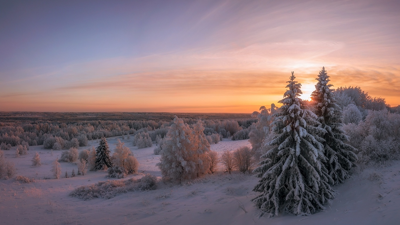 зима, снег, сугробы, деревья, архангельская область, россия