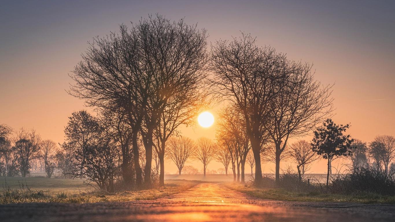 рассвет, деревья, солнце, туман