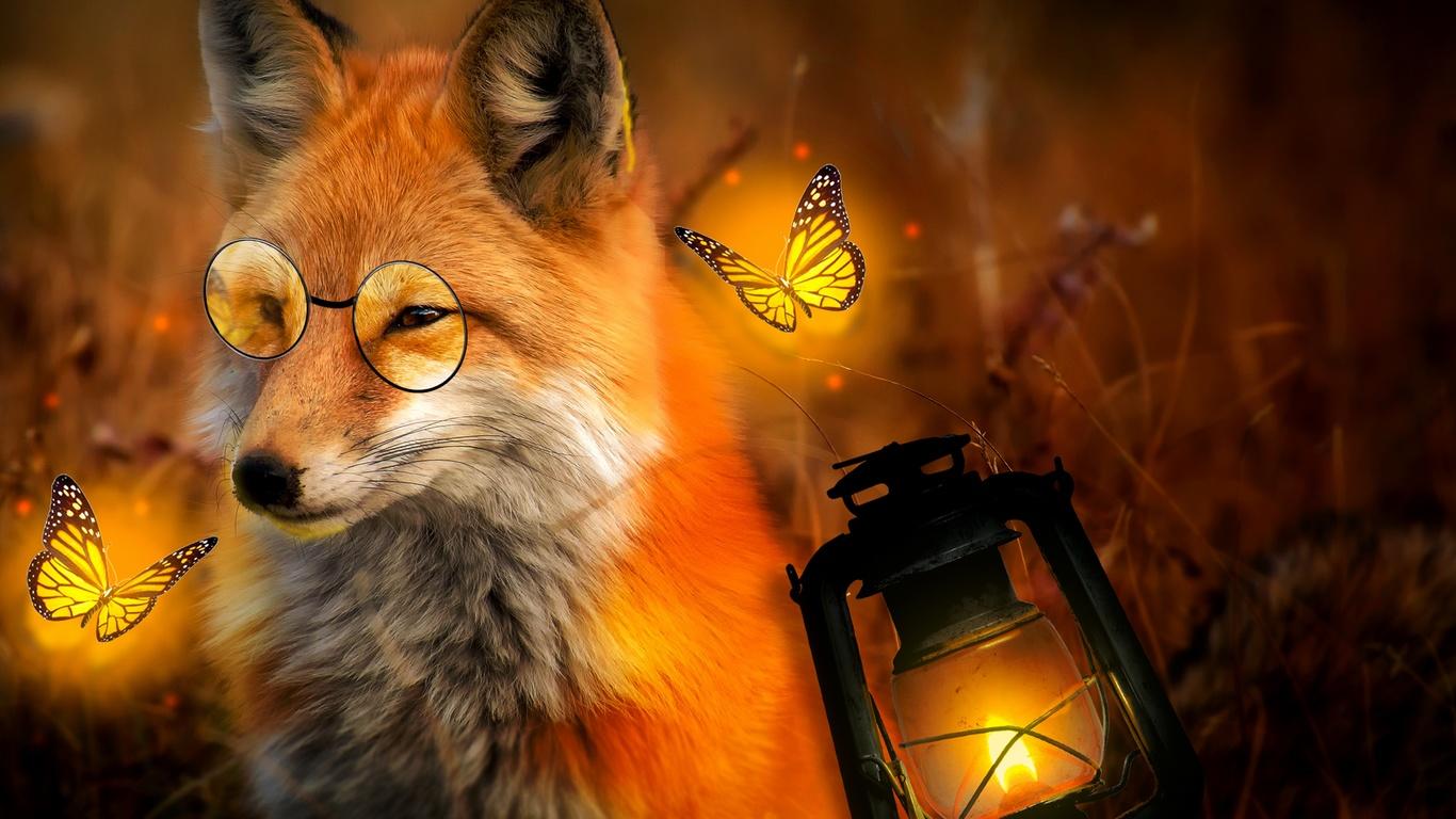 лиса, очки, бабочки, фонарь