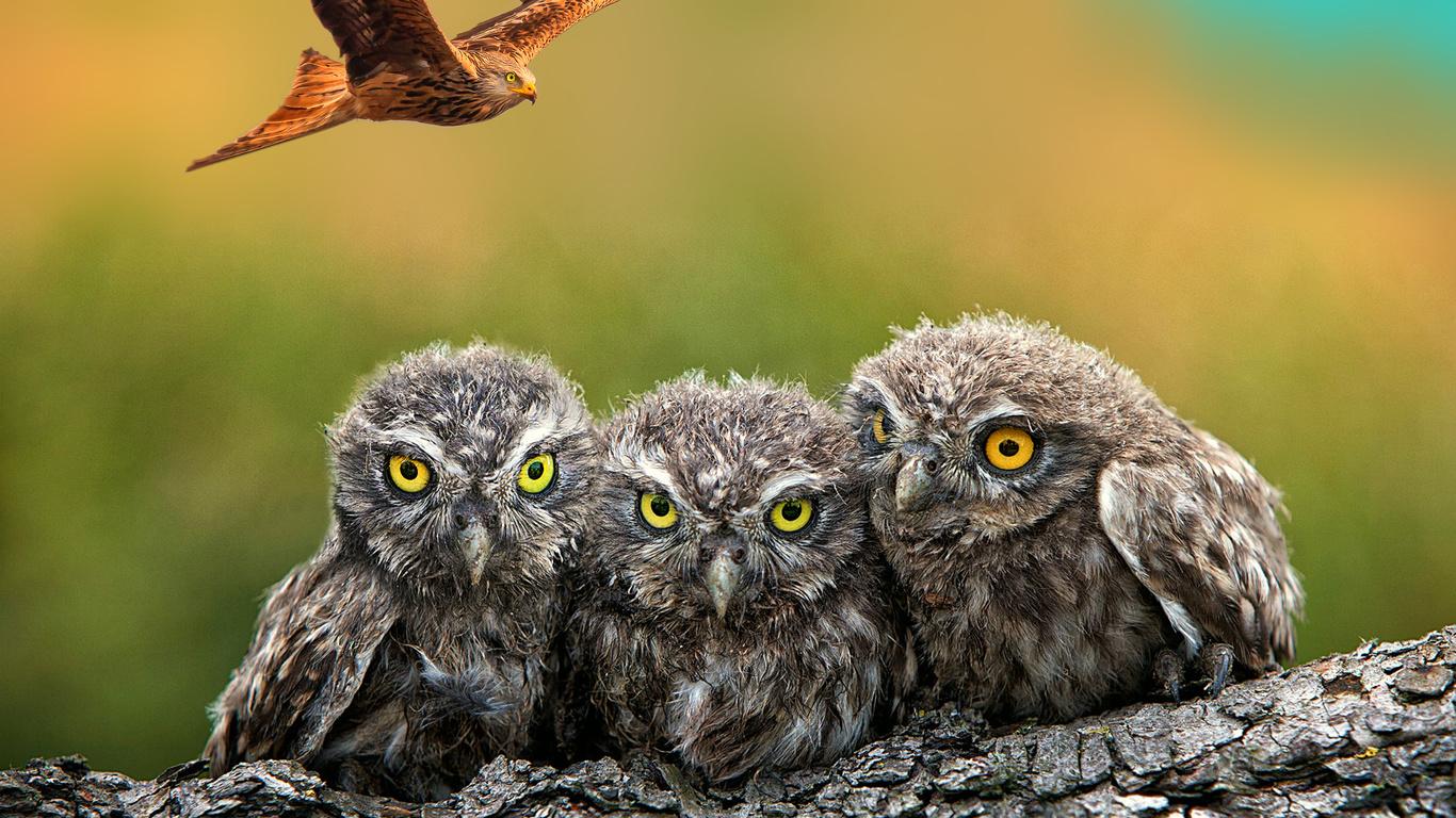 камуфляж, совята, орел, дерево