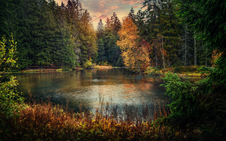 лесное озеро, закат, лес, деревья, осень, пейзаж