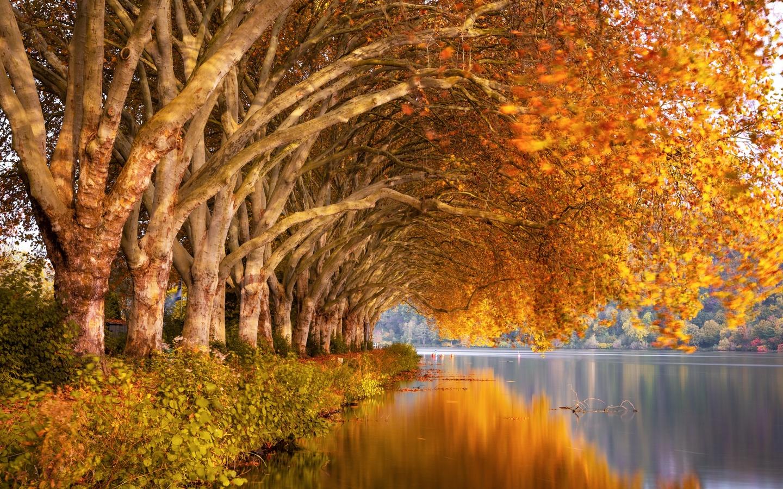 осень, деревья, отражение