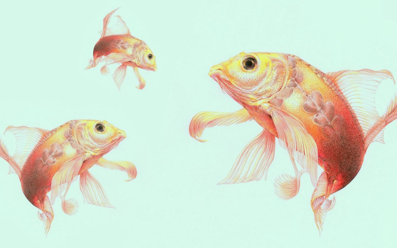 рыбки, фон, заставка