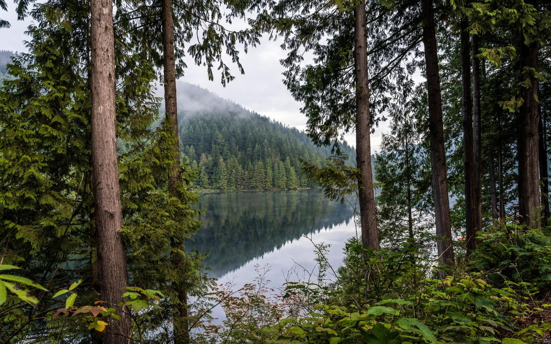 деревья, озеро, отражение