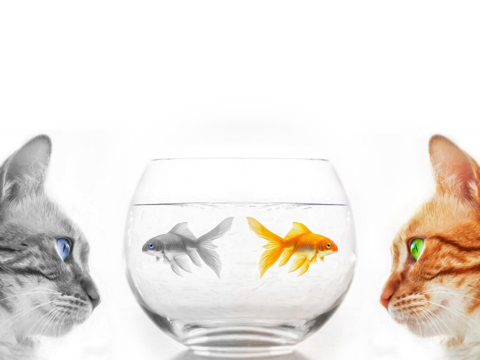 кошки, рыбки, цвет