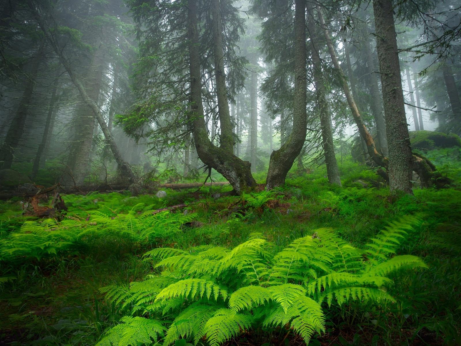 александров александър, супер фото, лес, папоротник