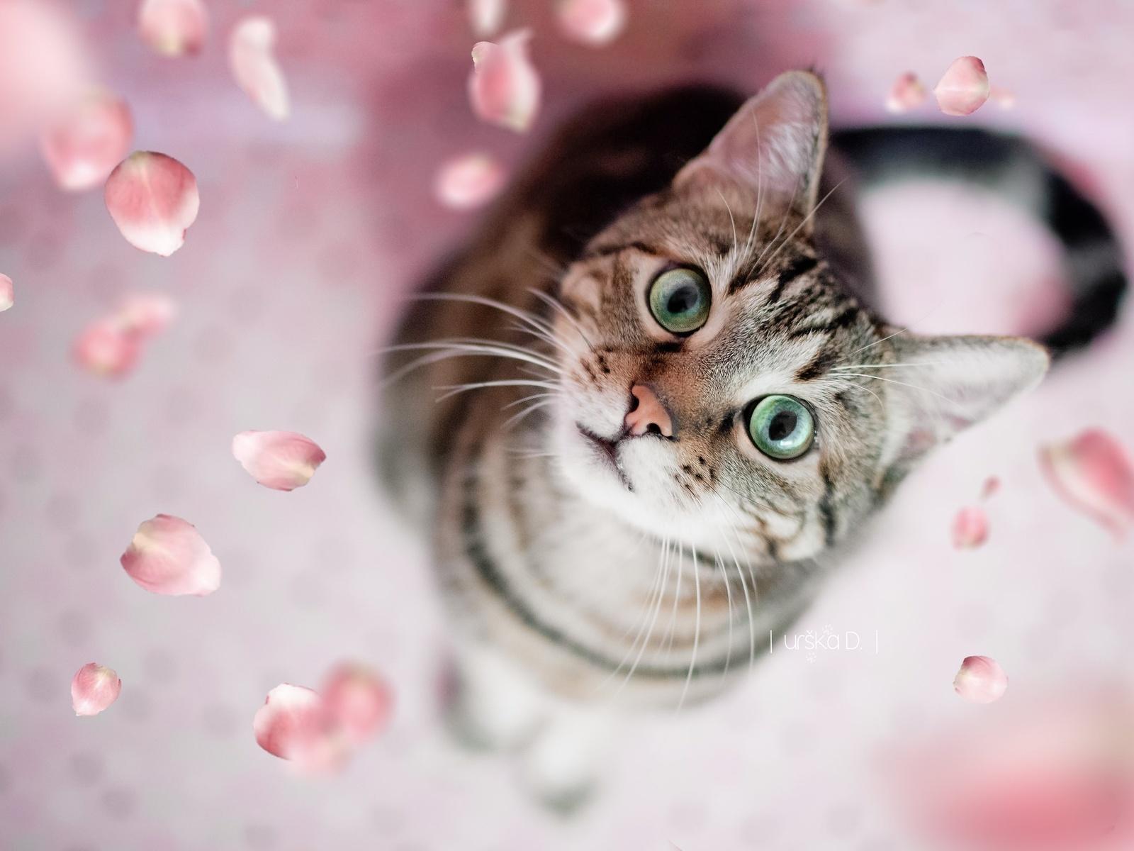 животное, кот, кошка, взгляд, лепестки