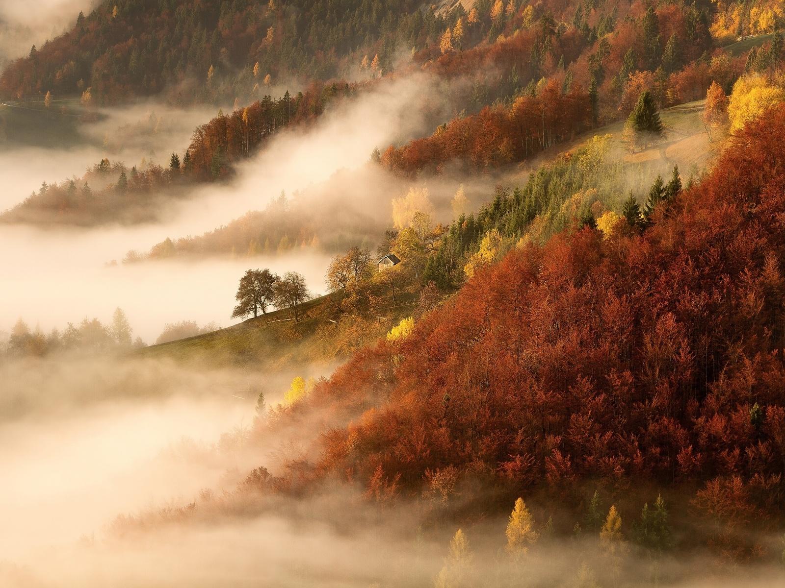 осень, лес, домик, туман