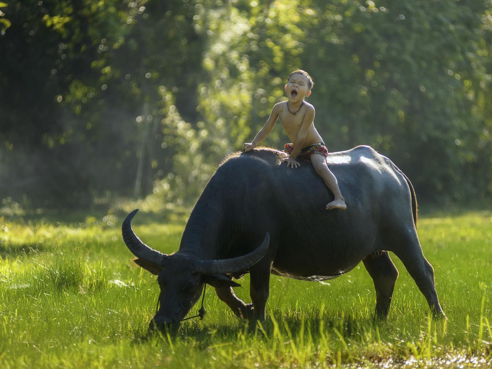 буйвол, мальчик, верхом, восторг, настроение, тайланд