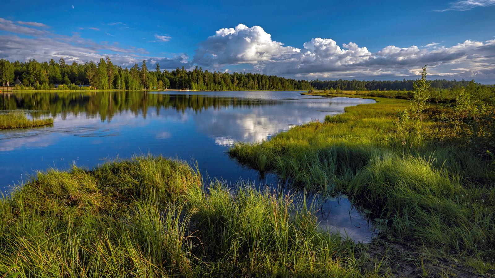 озеро, yugra, tyumen, oblast, трава, природа