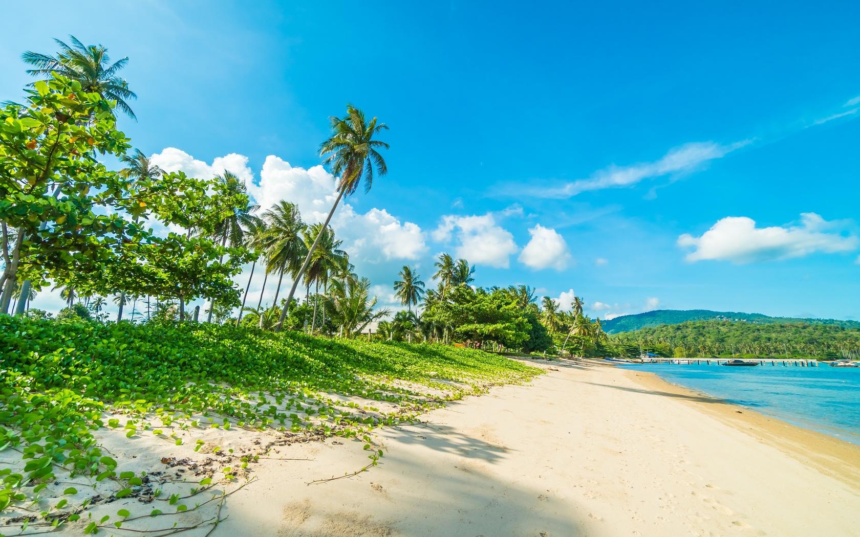 тропики, пейзажи, лето, море, пальмы, берег, песок