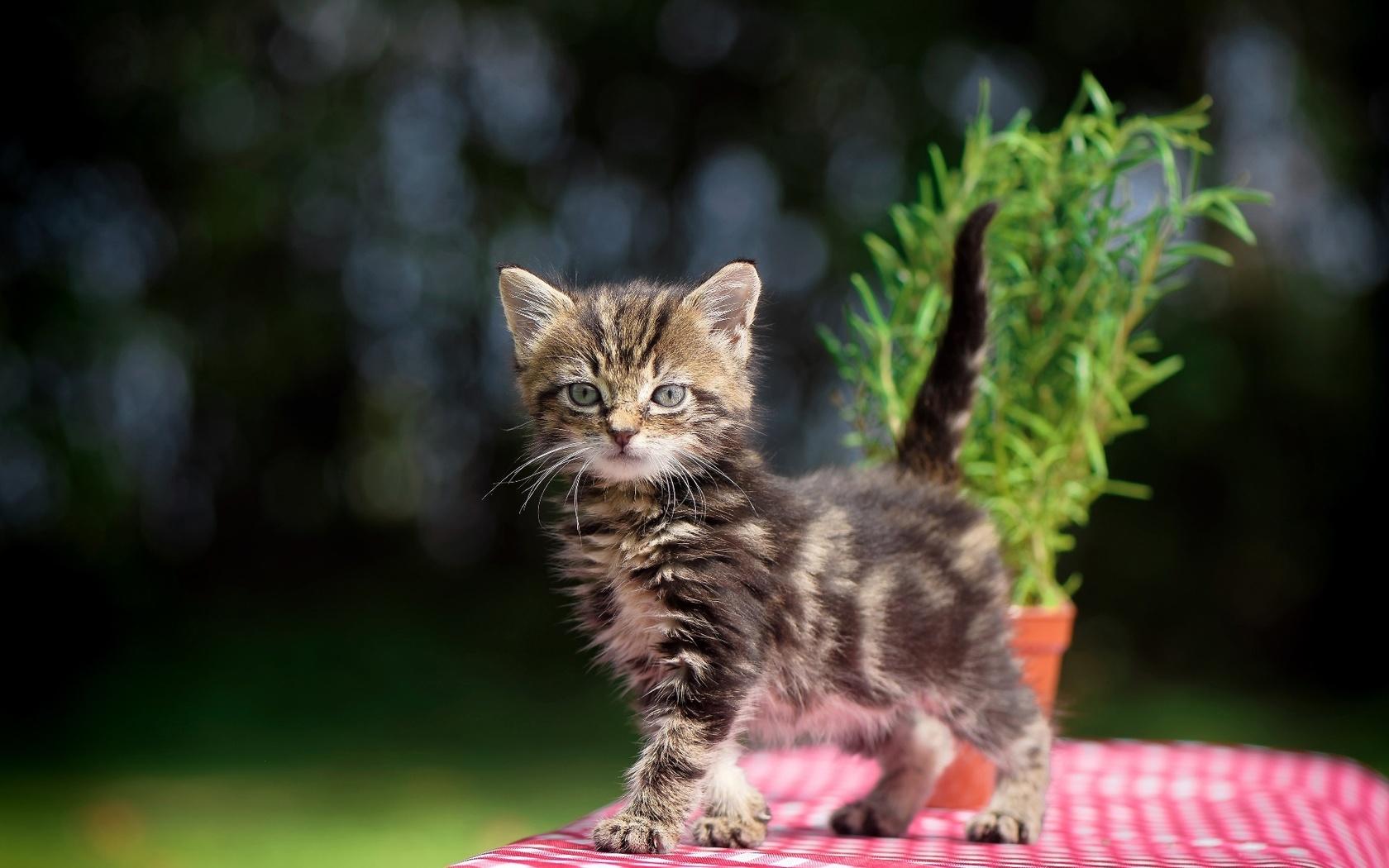 кот, котенок, трава