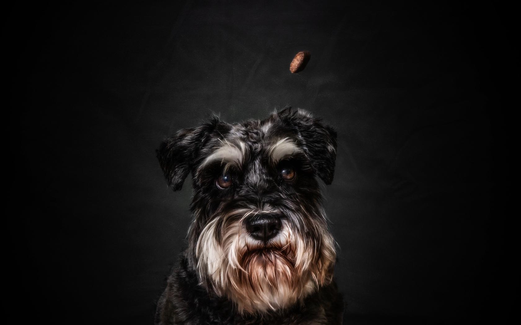 собака, морда, фон